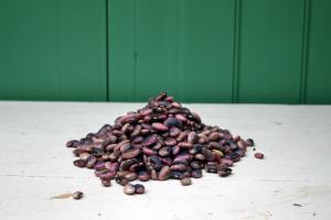 Beans 2011